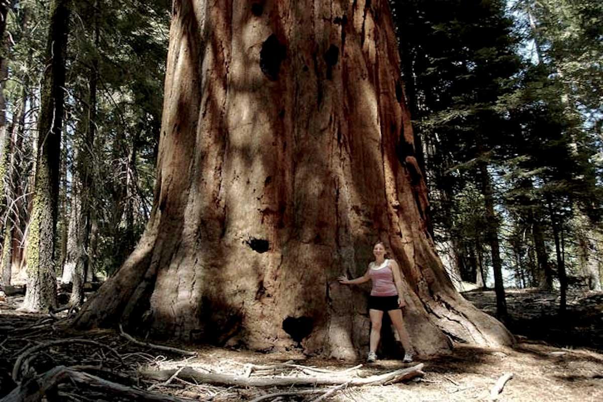sequoia gigante -julia butterfly hill.attivista e scrittrice -@crono.news