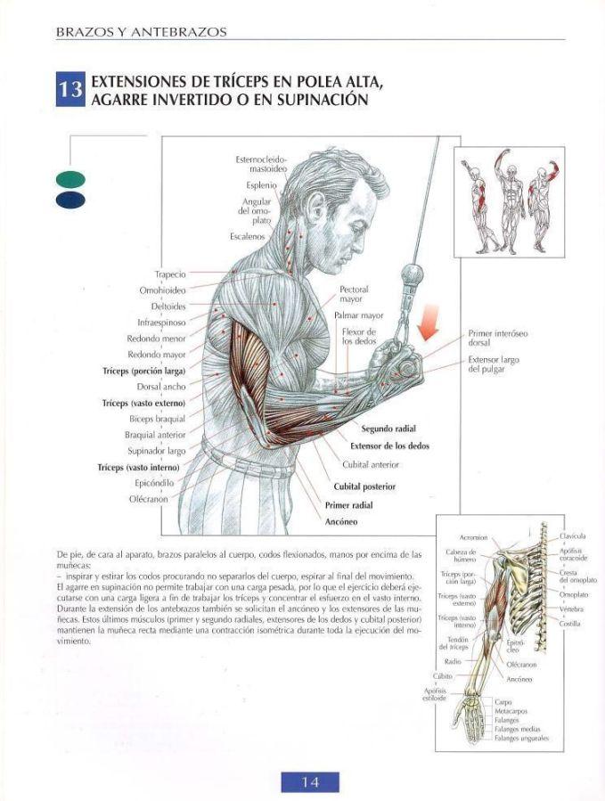 Extensiones de triceps polea alta agarre supinación