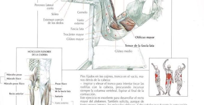 Elevaciones del tronco en suspensión