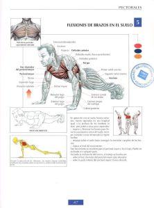 Flexiones de brazos en el suelo