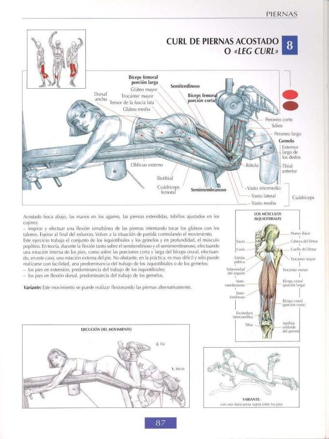 Curl de biceps femoral