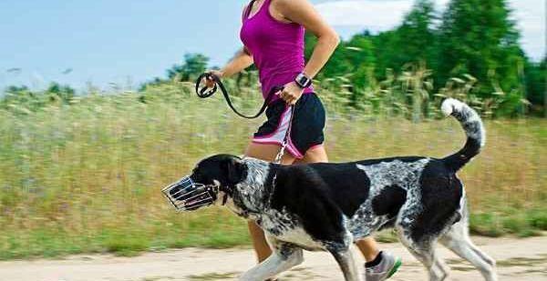 Cómo entrenar con tu perro