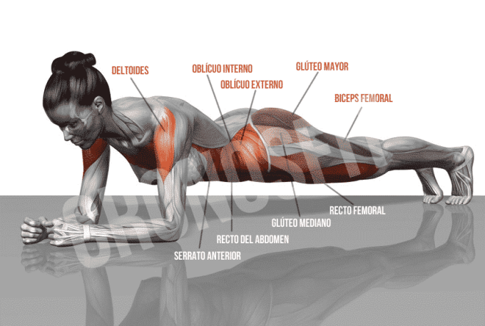 Músculos implicados en el Plank - Cronosfit