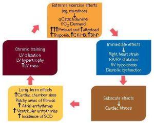 Ejercicio físico y remodelación cardiaca en Atletas altamente entrenados (2)
