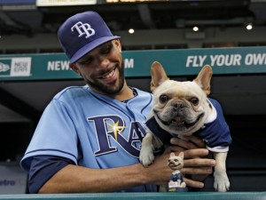 "Tampa Bay Rays starting pitcher David Price poses with his dog ""Astro"" and a ""Astro"" bobblehead before a baseball game against the Oakland Athletics Sunday, April 21, 2013, in St. Petersburg, Fla. (AP Photo/Chris O'Meara) ORG XMIT: OTKCO103"