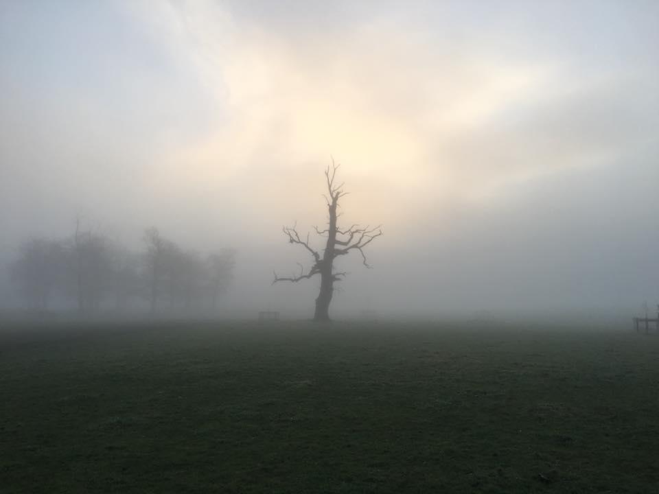 Spooky dog walk