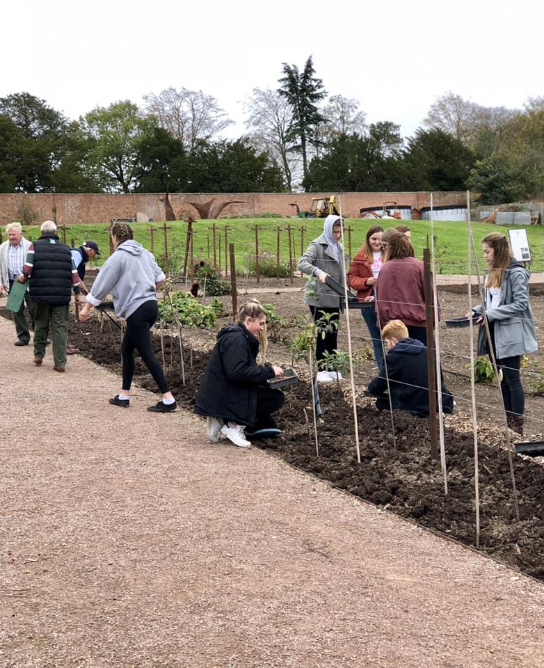 Planting crocuses 4