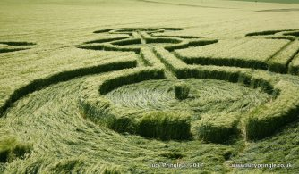 Milk Hill, Alton Barnes, Nr Marlborough, Wiltshire. 25 May 2017. Barley. c. 200 feet (61m) overall. Equal-armed cross-shaped motif with circles on each arm and at its centre. One branch has a fan motif with a scalloped edge.