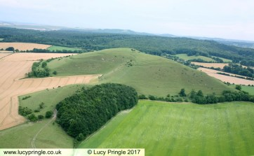 Cley Hill. Nr Warminster. Wiltshire. 18 July 2017. In excess of 300 foot (92m) overall diameter. Barley. A complex formation of scalloped edges with two arcs containing semi circles at either side of the each scalloped apex. A central cube has 12 radiating triangles .