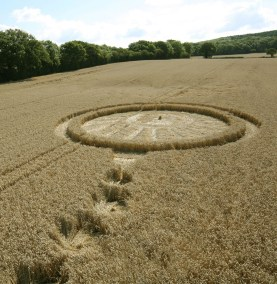 A ringed circle with a tail of 13 circles of decreasing size. The main circle has a complex and varied ground lay similar to a sunburst with a small standing centre of entwined wheat.
