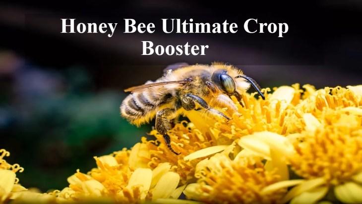 Honeybees Ultimate Crop Boosters