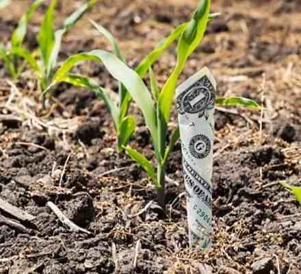 Punjab Gov. Announced Subsidy for Barani Areas