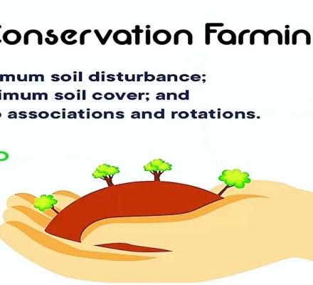 conservation farming