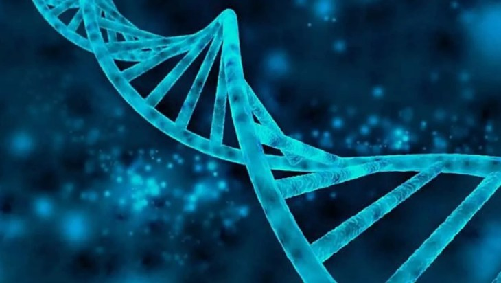 Non-coding dna repetitive elements
