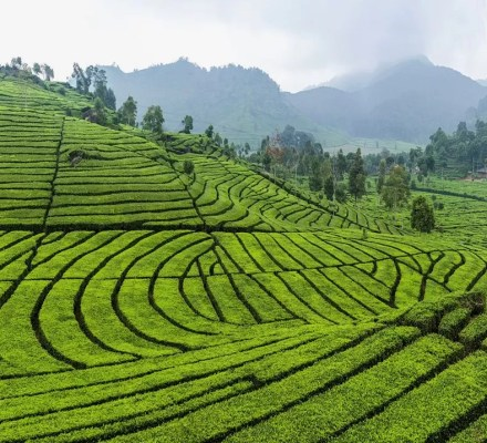 what is plantation agriculture