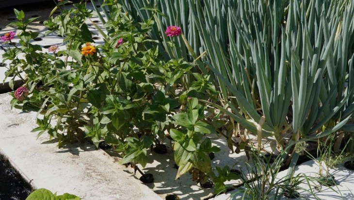 Aquaponics Sustainable Food Systems