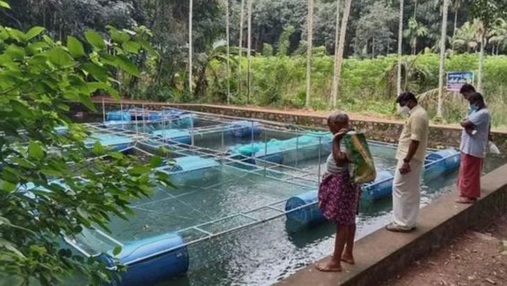 Kerala Village Aquaponics