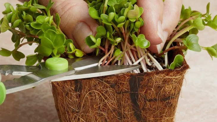 Microgreens Production Guide