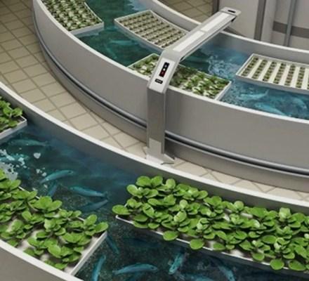 Multitrophic Aquaponics