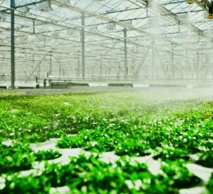 Organic Aquaponics in European Union