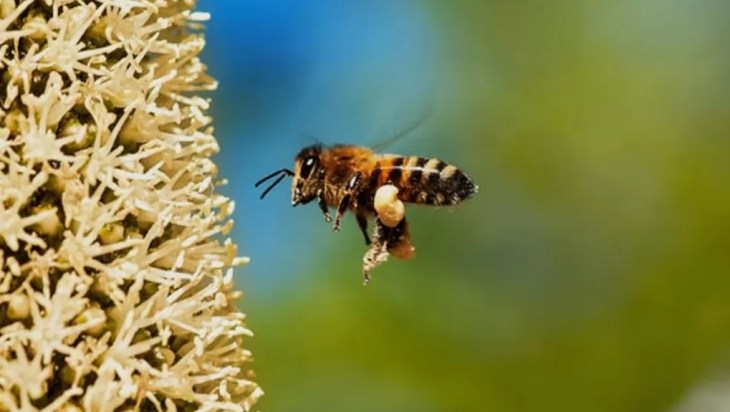 Wild Bees Need A Variety Of Agricultural Landscapes To Survive