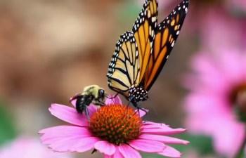 Decline In Pesticide Use and Pollinator Damage