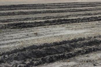 Ruts made when harvesting soybean under saturated soil conditions