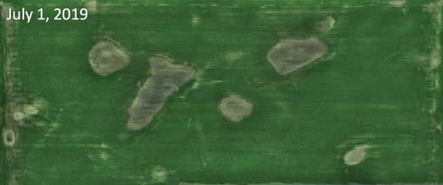 July 1 crop imagery