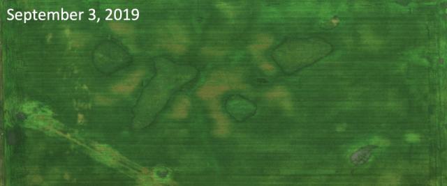 Sept 3 crop imagery