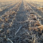 Winter Wheat Planting Practices After Soybeans