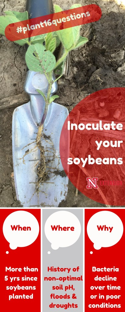 Inoculating soybeans infographic