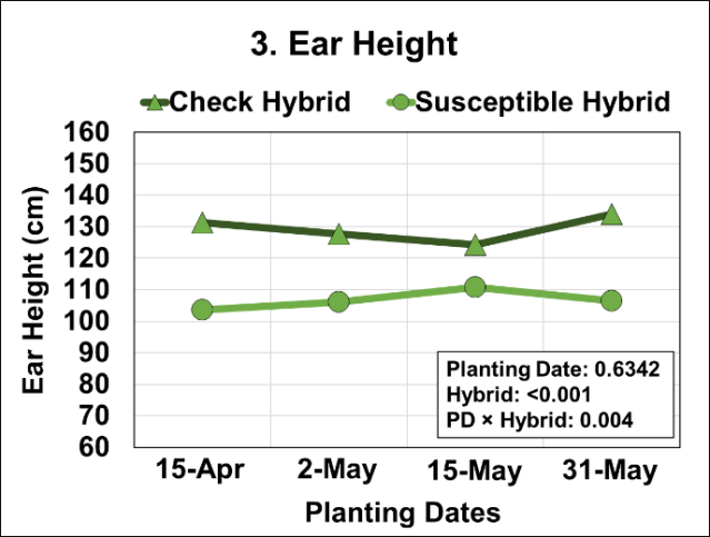 Graph of Effects of four planting dates and two hybrids on ear height from the ground level.
