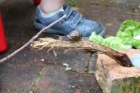 Thomas et les escargots (re-suite) (18)