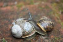 Thomas et les escargots (suite) (6)