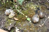 Escargots (1)