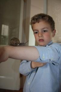 Thomas et les escargots - 17.05 (4)