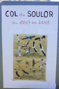 Ortiac 2016 - balade de tonton Raymond - oiseaux - 2.8 (81)-800