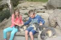 ortiac-ete-2016-4-8-2016-parc-animalier-des-pyrenees-233-800