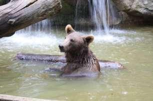 ortiac-ete-2016-4-8-2016-parc-animalier-des-pyrenees-254-800