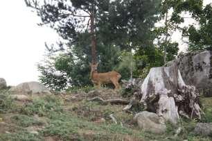 ortiac-ete-2016-4-8-2016-parc-animalier-des-pyrenees-318-800