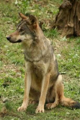 parc-animalier-des-pyrenees-2012-77-800
