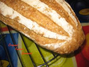 Pain zébré - fevrier 2009 003 copie