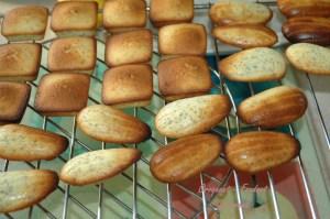 Mini-cake citron-pavot - DSC_5936_14294