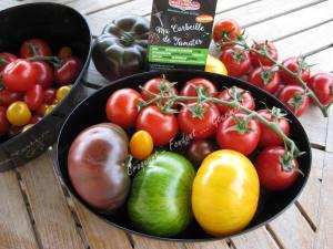 Tomates Prince de Bretagne IMG_6529