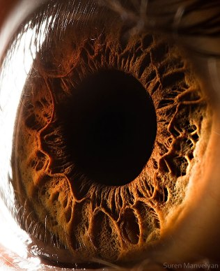 Extreme close-up of the human eye