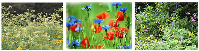 summer meadow colors