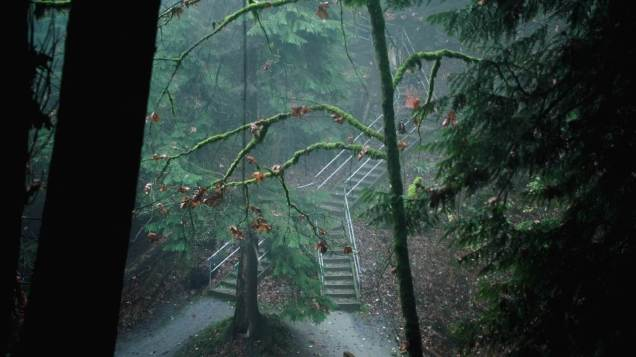 """Another scene from """"Chapter 2"""", real trees litter that episode after David is rescued. Paths diverge."""