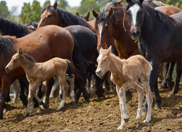 Wild Horse Program Mismanaged
