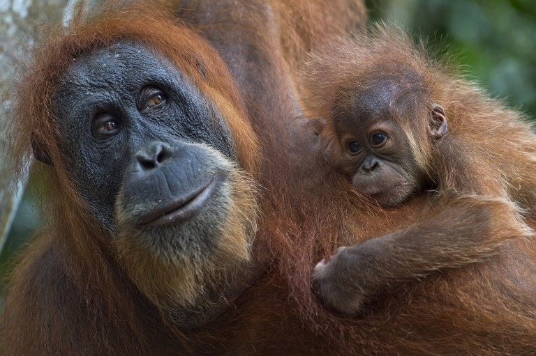 Palm Oil Fueling An Ecological Disaster