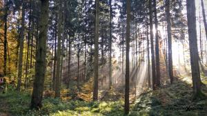 schoenes Waldbild